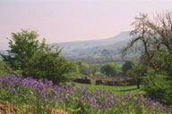 Dales with bluebells